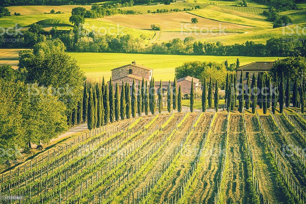 Tuscany Farmhouse and Vineyards, Chianti Region royalty-free stock photo