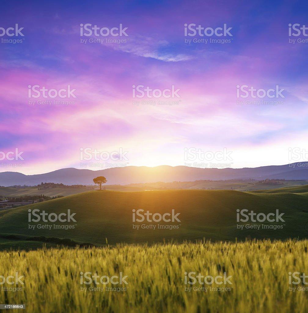 Tuscany Fields royalty-free stock photo