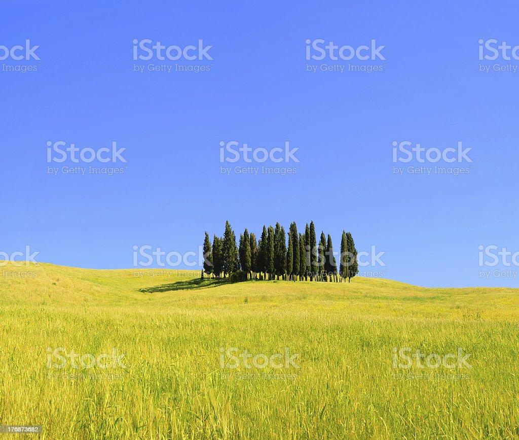 Tuscany forest royalty-free stock photo