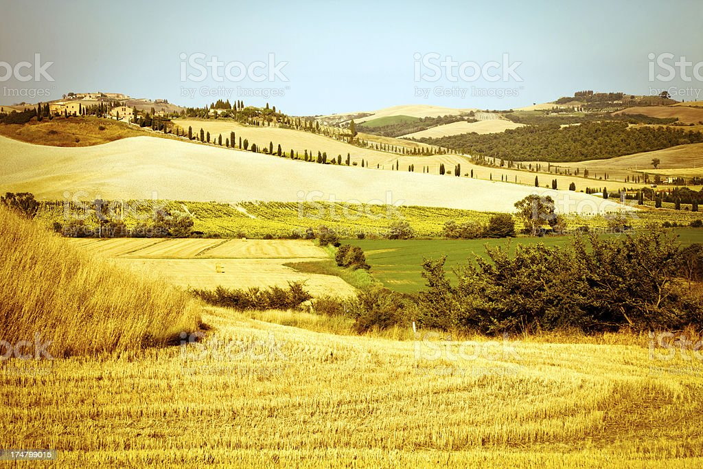 Tuscany Gold royalty-free stock photo