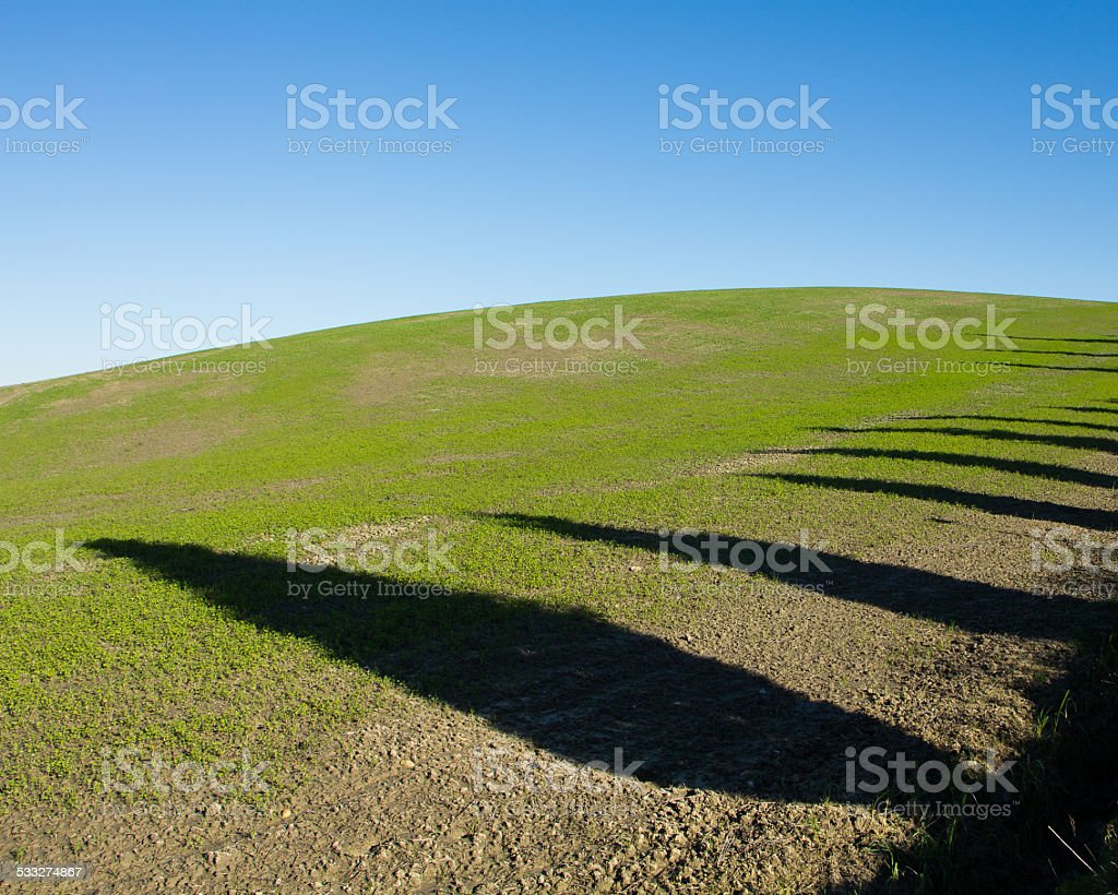 Tuscany hills,  trees ,green grass and  blue sky stock photo