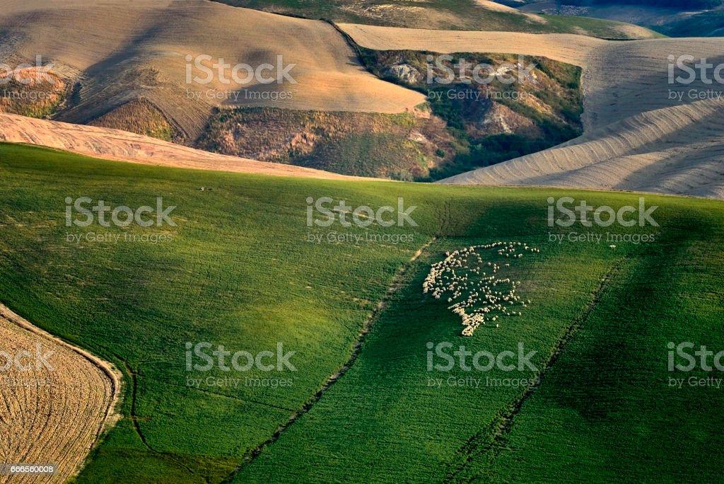 Tuscany, Italy, Montepulciano, rural landscape stock photo