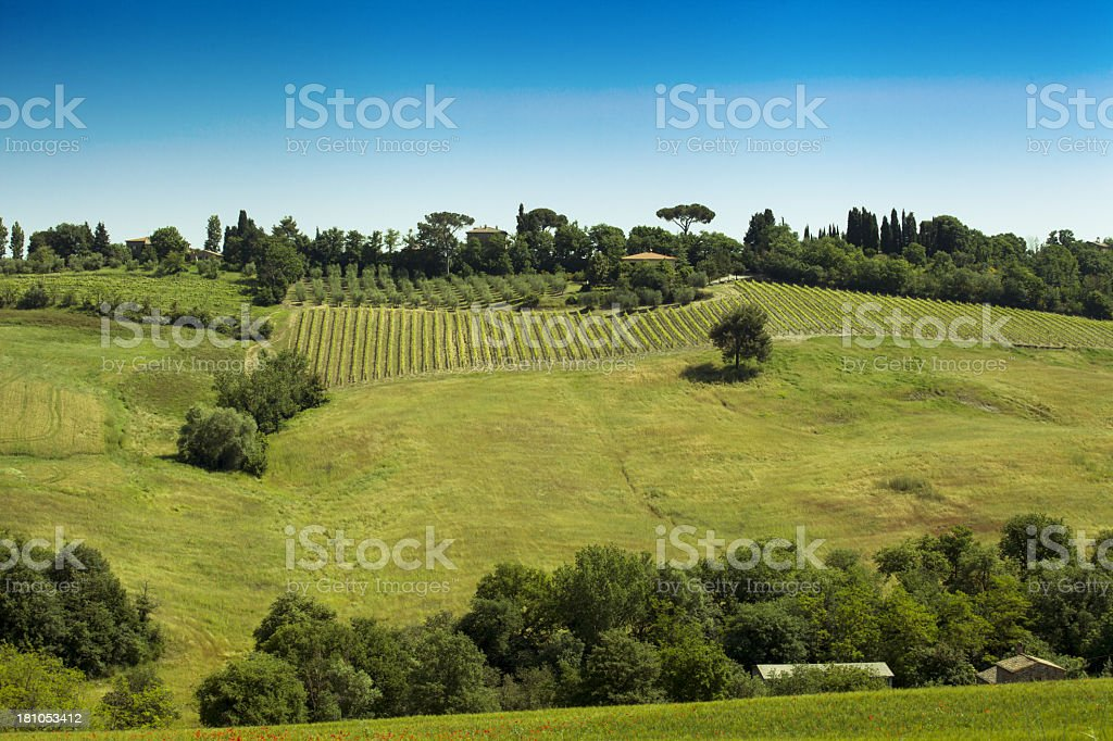 Tuscany landscape royalty-free stock photo