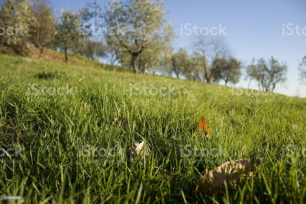 tuscany landscape (with fall leaves and olive trees) stock photo
