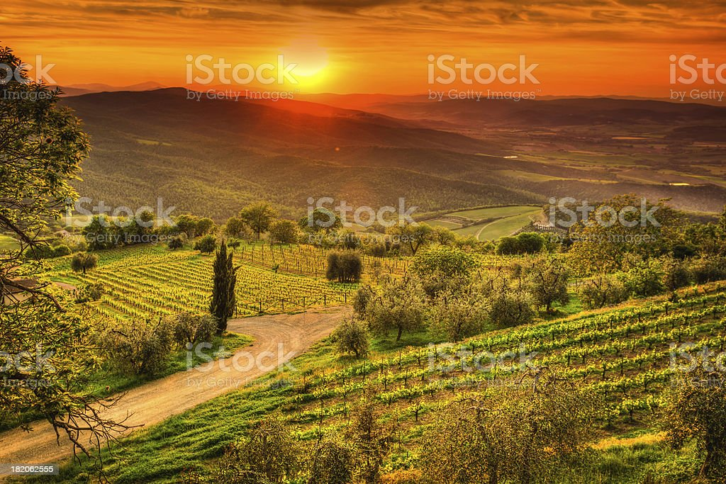 Tuscany Landscape with Vineyards at Sunset, Chianti Region, Val d'Orcia stock photo