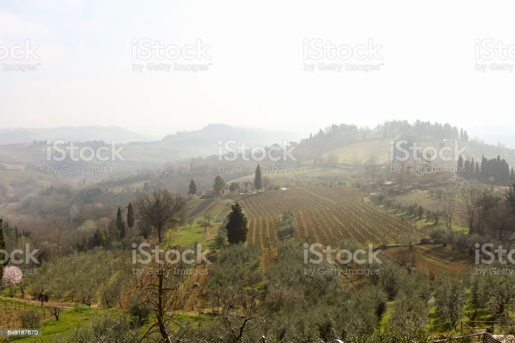 Tuscany Landscape with Vineyards, Chianti Region, Val d'Orcia stock photo