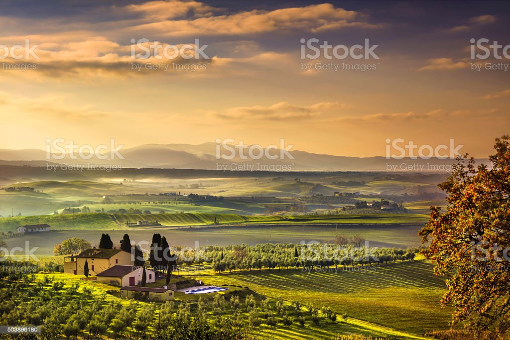 Tuscany Maremma foggy morning, farmland and green fields. Italy. stock photo