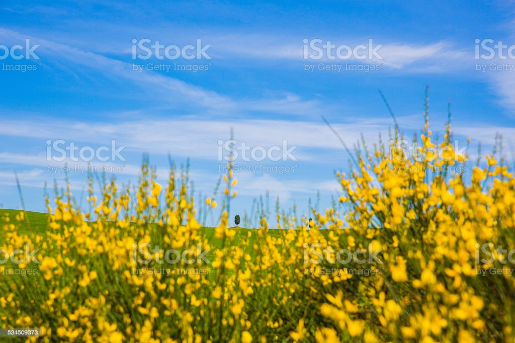 Toskana stock photo