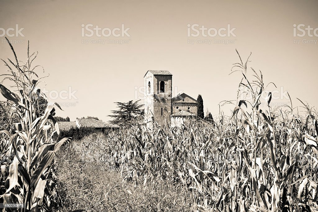 Tuscany Romanesque church immersed in a corn field stock photo