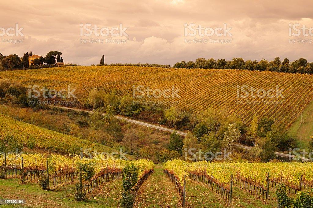Tuscany Street between Vineyards Fall royalty-free stock photo