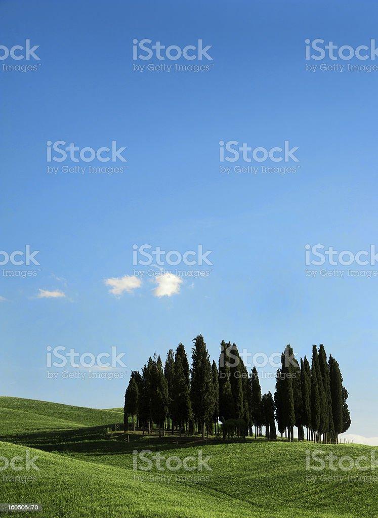 Tuscany trees royalty-free stock photo