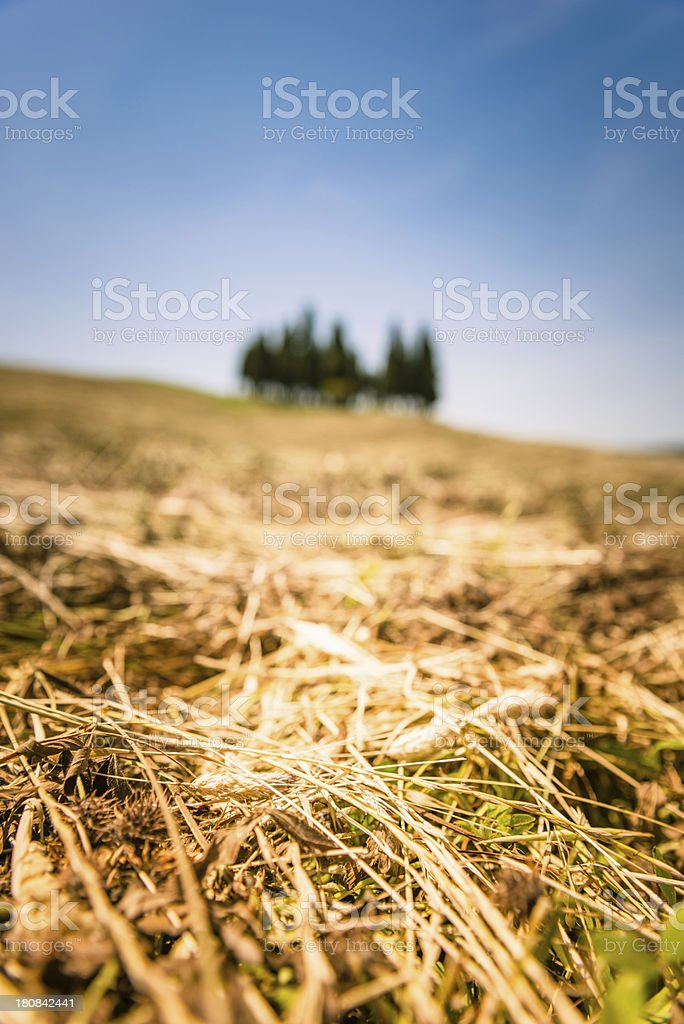 Tuscany val d'orcia landscape royalty-free stock photo