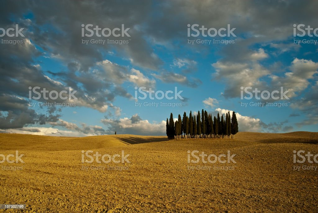 Tuscany Val d'Orcia trees royalty-free stock photo