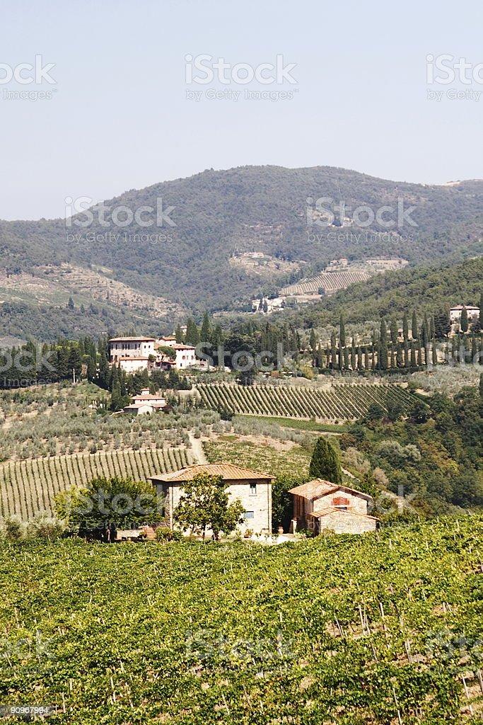 Tuscany Vineyard Country Summer stock photo