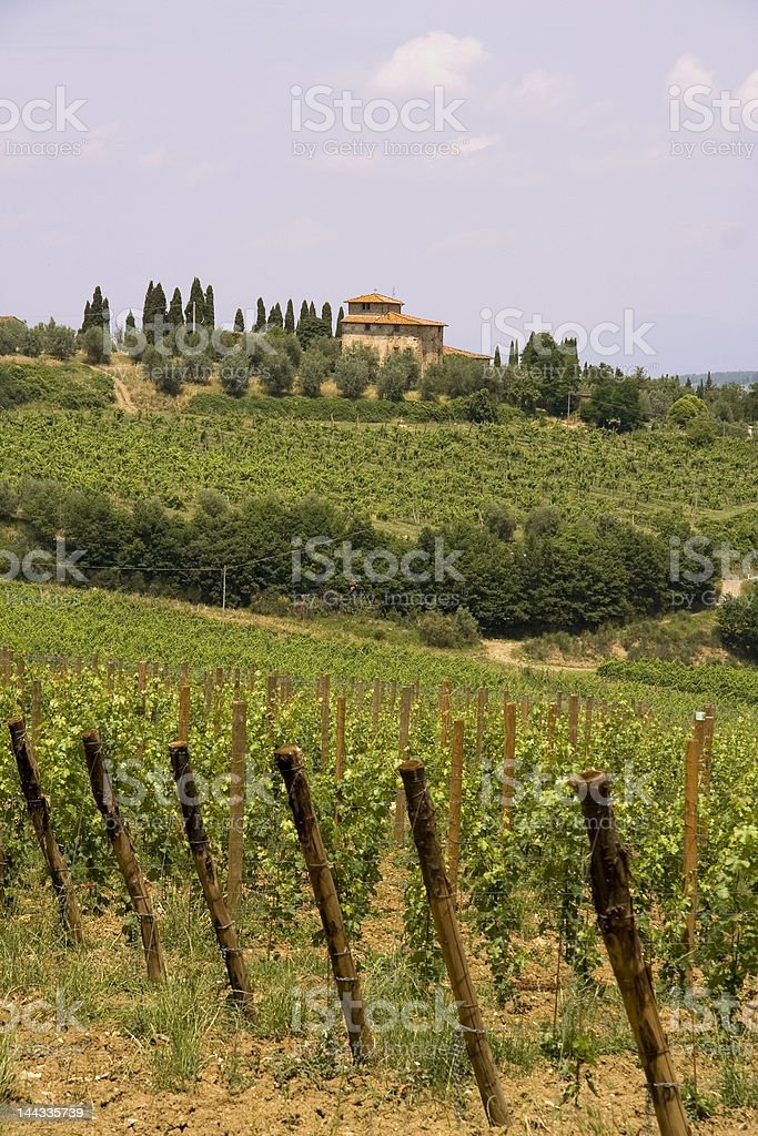 Tuscany vineyard royalty-free stock photo