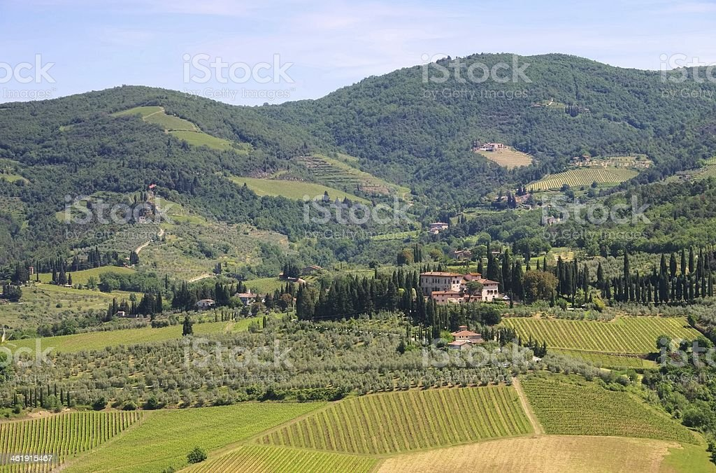 Tuscany vineyard stock photo