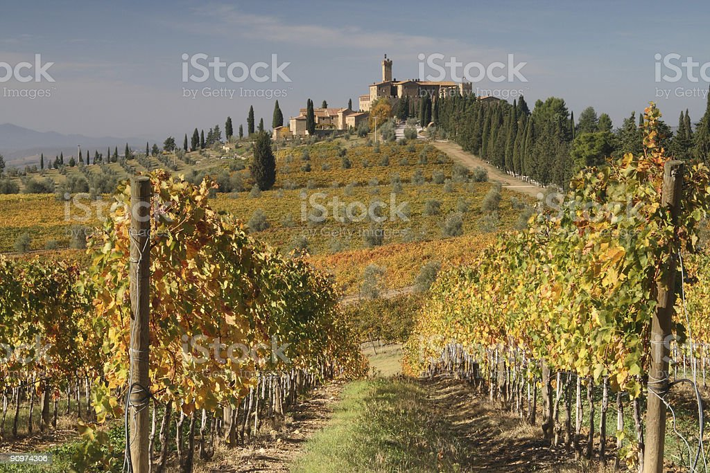 Tuscany Vineyards with View to Castel royalty-free stock photo