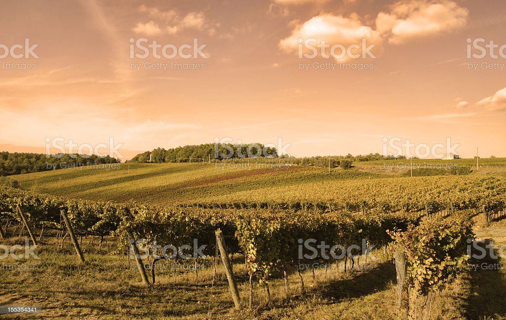 tuscany wineyard royalty-free stock photo