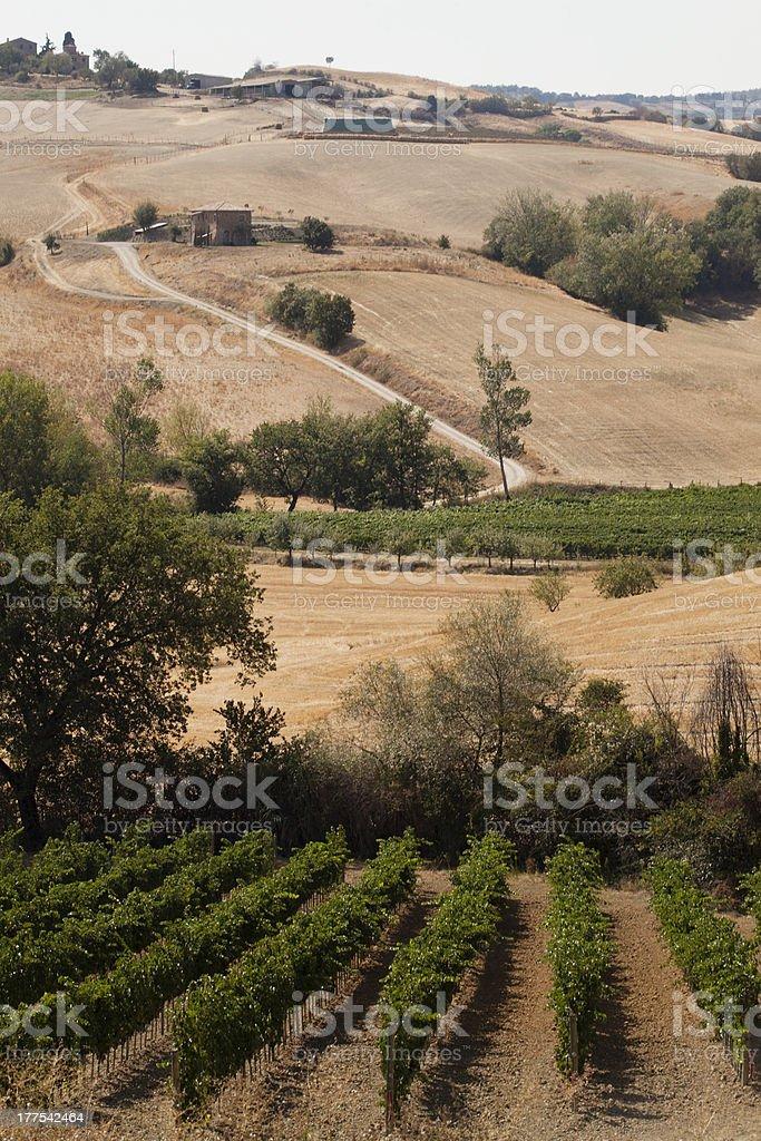 Tuscany's hill royalty-free stock photo