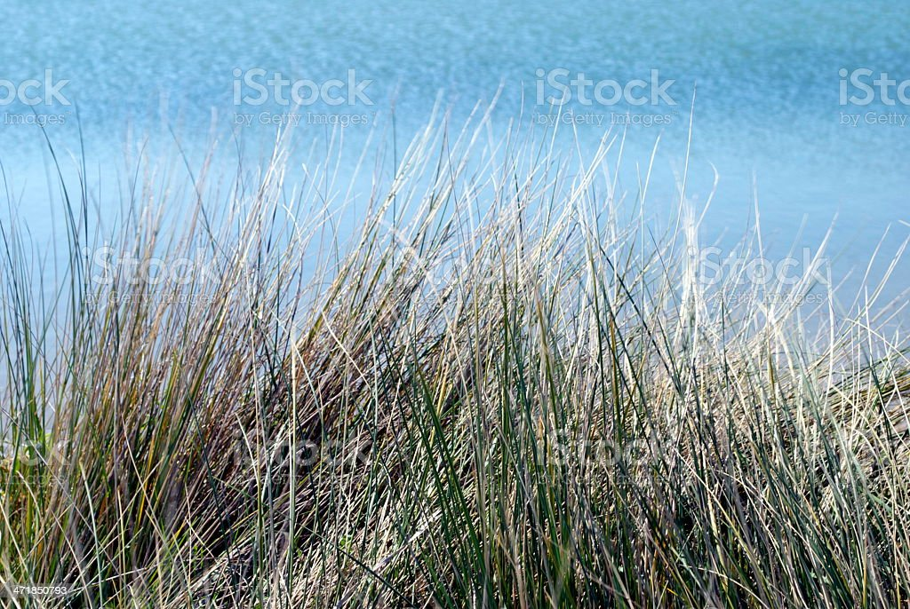 Tussock and Sea royalty-free stock photo