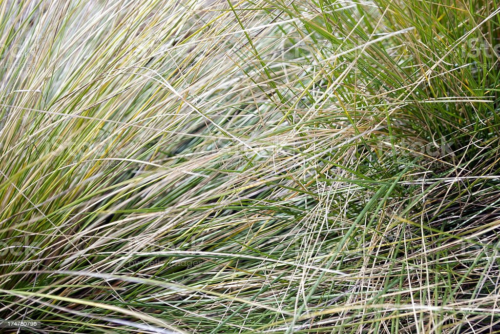 Tussock Grass Background royalty-free stock photo