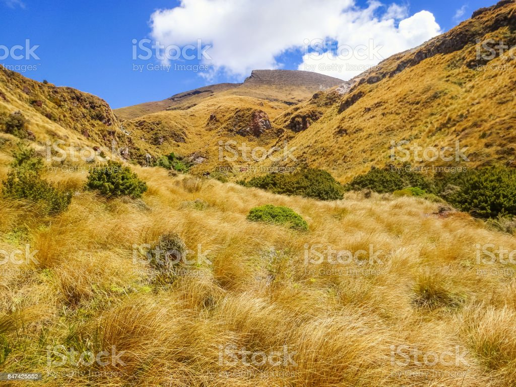 Tussock grasslands at Tongariro Alpine Crossing stock photo