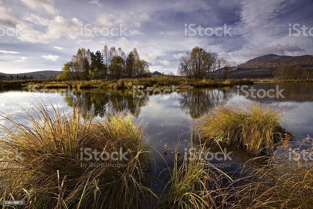 Tussocks on a marsh stock photo