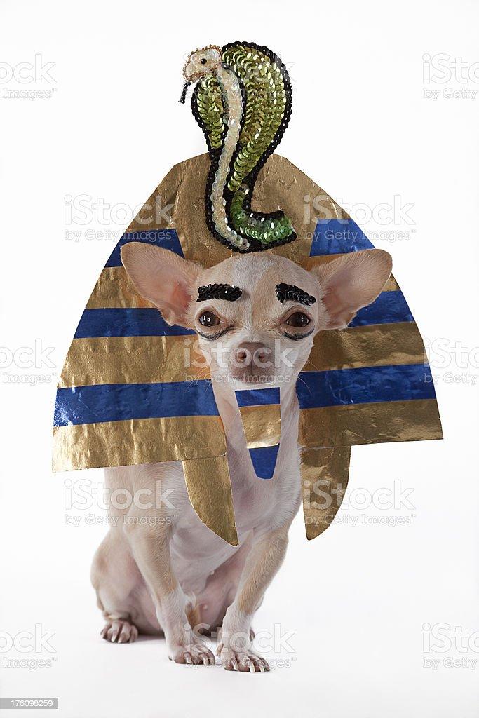 tutankamon stock photo