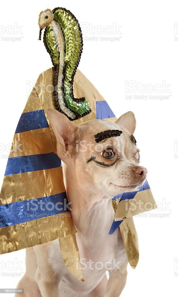 tutankamon royalty-free stock photo