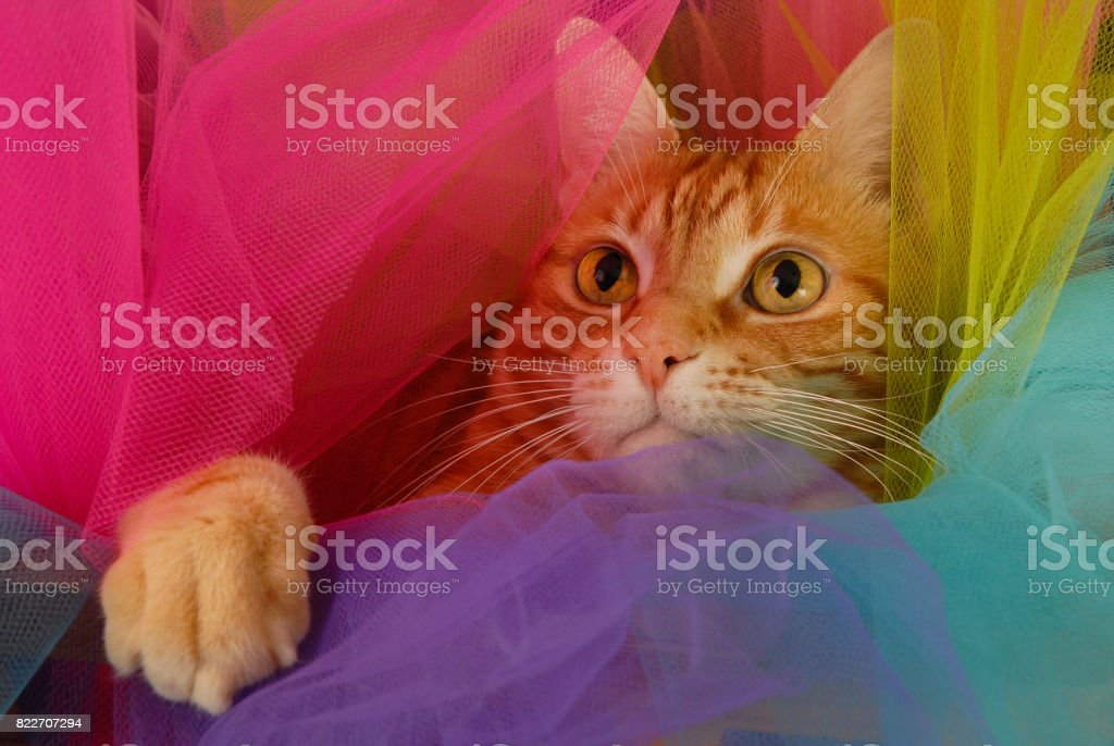 Tutu Cat Hide and Seek stock photo