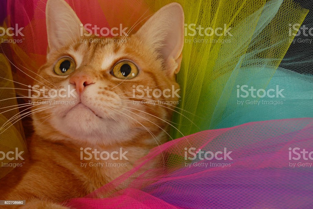 Tutu Cat Starring Up stock photo