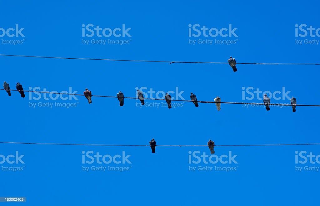Tweeting birds royalty-free stock photo