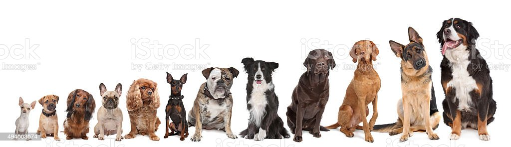 twelve dogs in a row stock photo