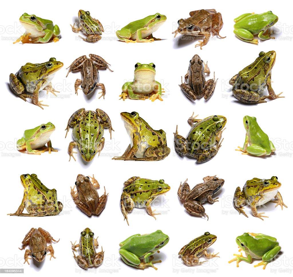 twenty five frogs stock photo