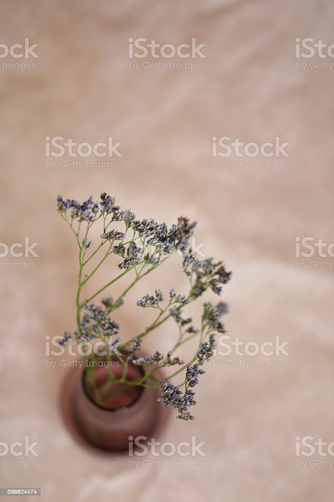 twig in a vase stock photo