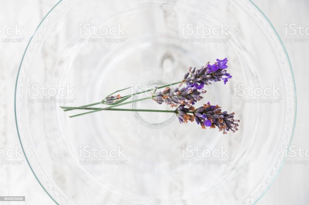 Twig of lavender in glass tray on white background stock photo