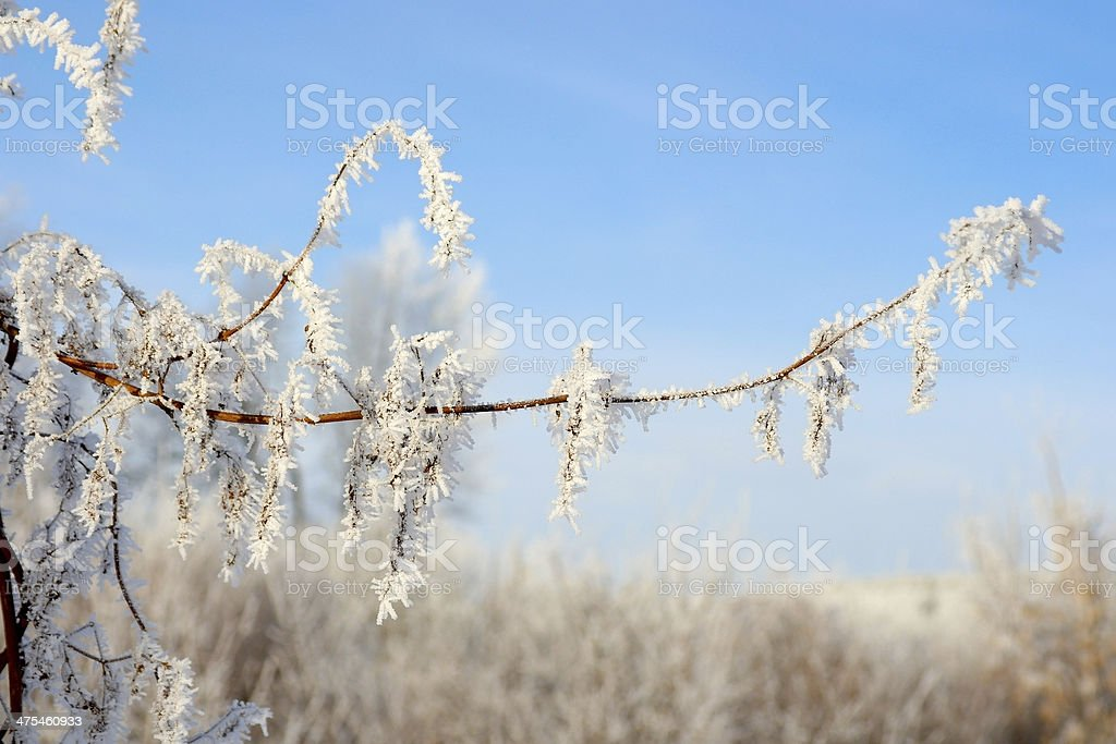 Twig of tree hoar-frost covered stock photo