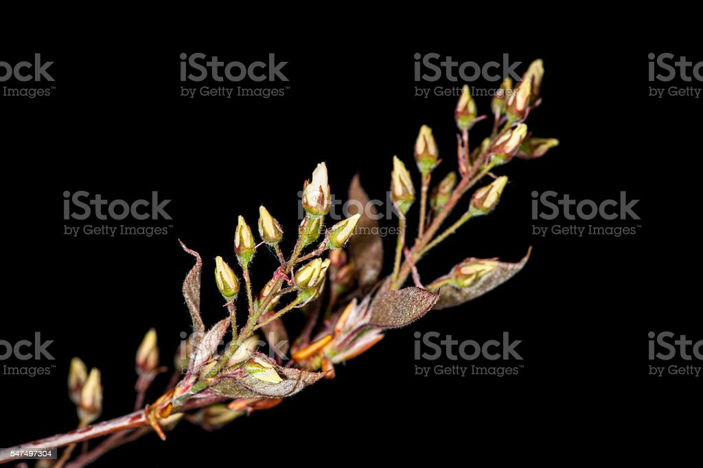 Twig on black horizontal stock photo
