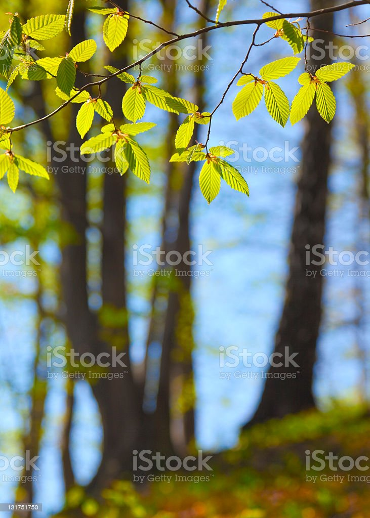Twig with leaves royalty-free stock photo