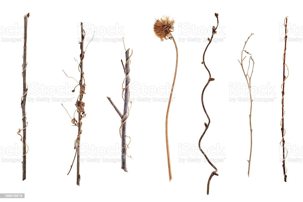 Twigs and Sticks Isolated on White royalty-free stock photo