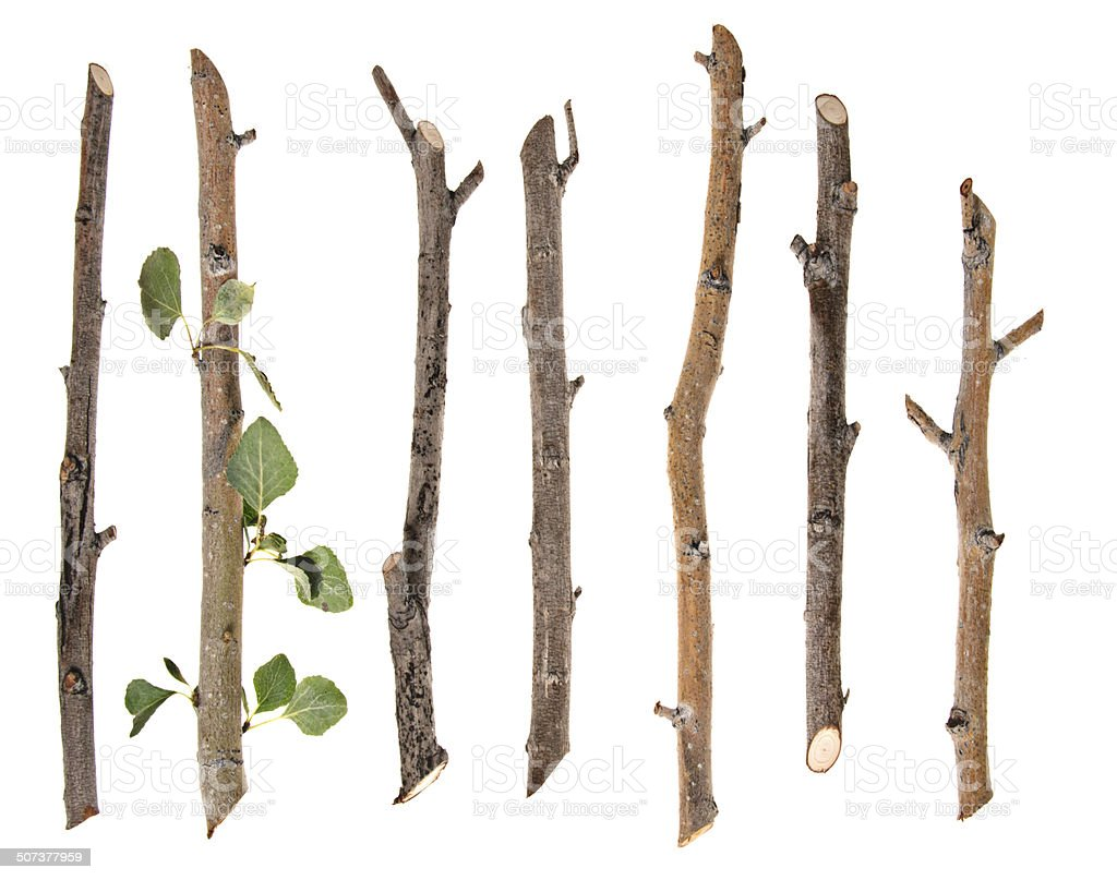 Twigs And Sticks Isolated On White stock photo 507377959