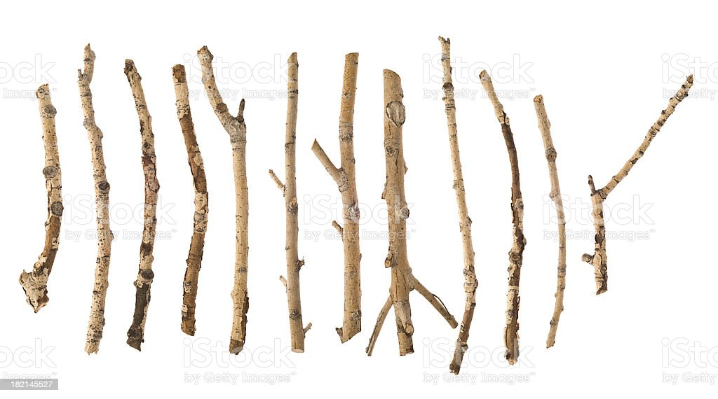 Twigs and Sticks stock photo