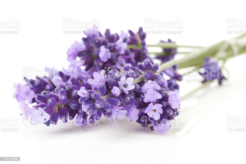 twigs lavender in closeup royalty-free stock photo