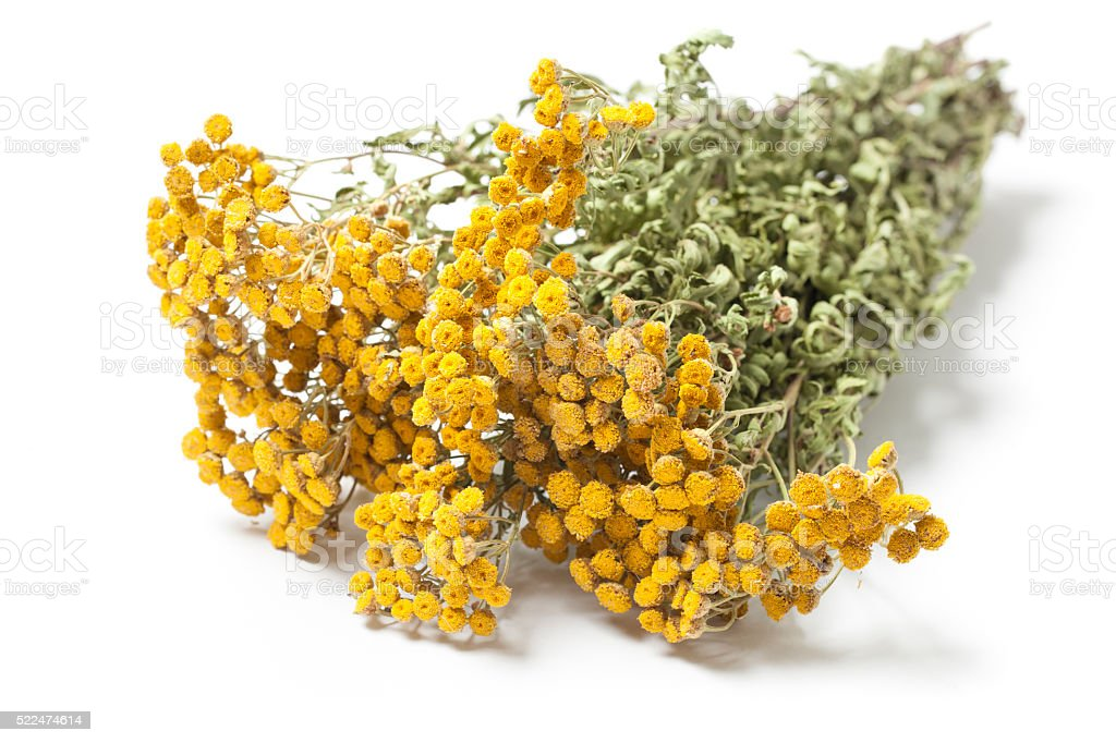 Twigs of Dried Herb Tansy stock photo