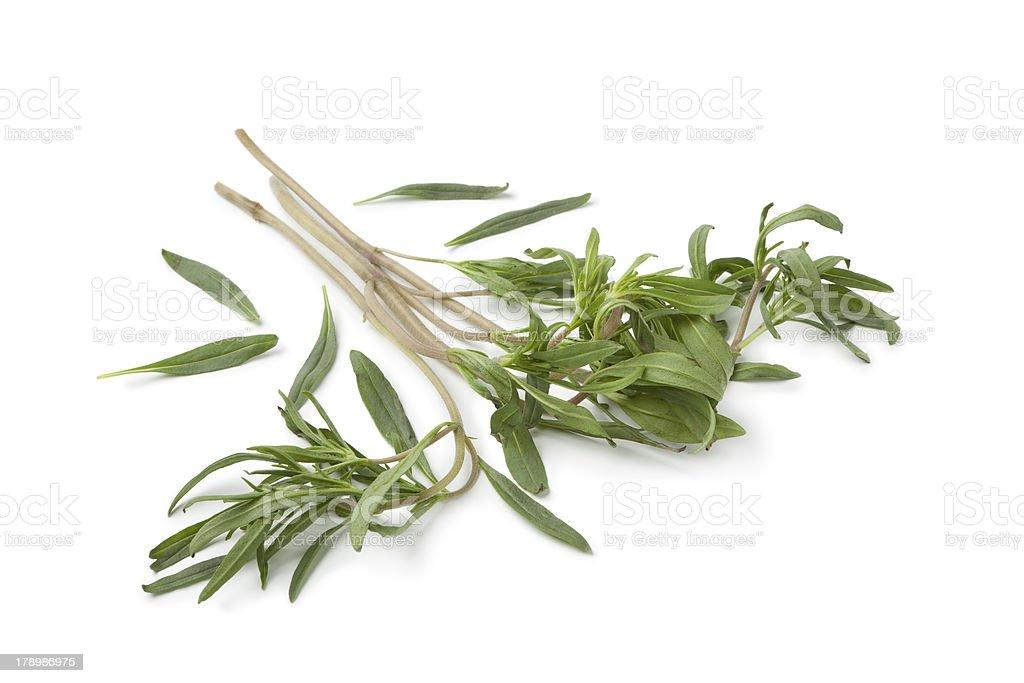 Twigs of fresh satureja montana stock photo