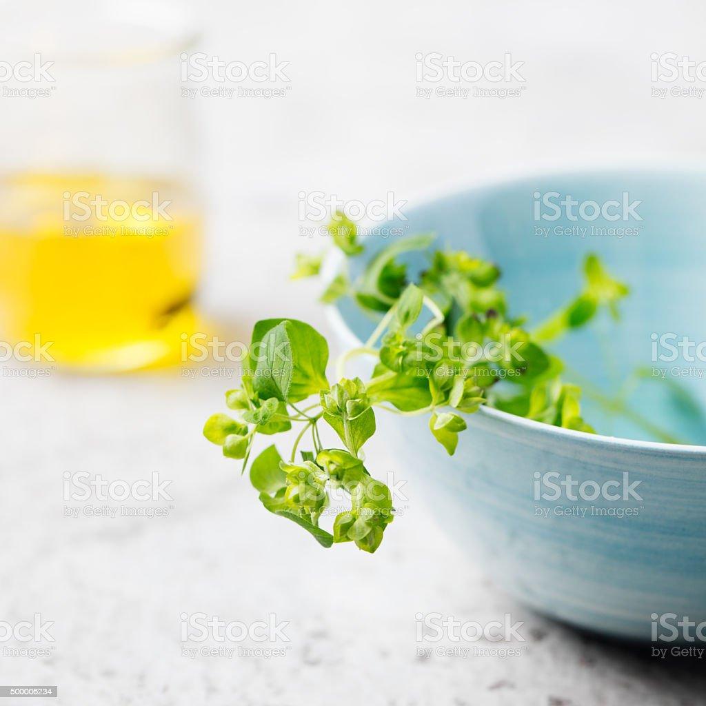 Twigs of oregano on a white background stock photo