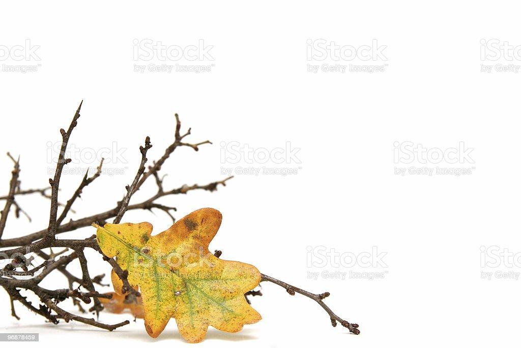 Twigs royalty-free stock photo