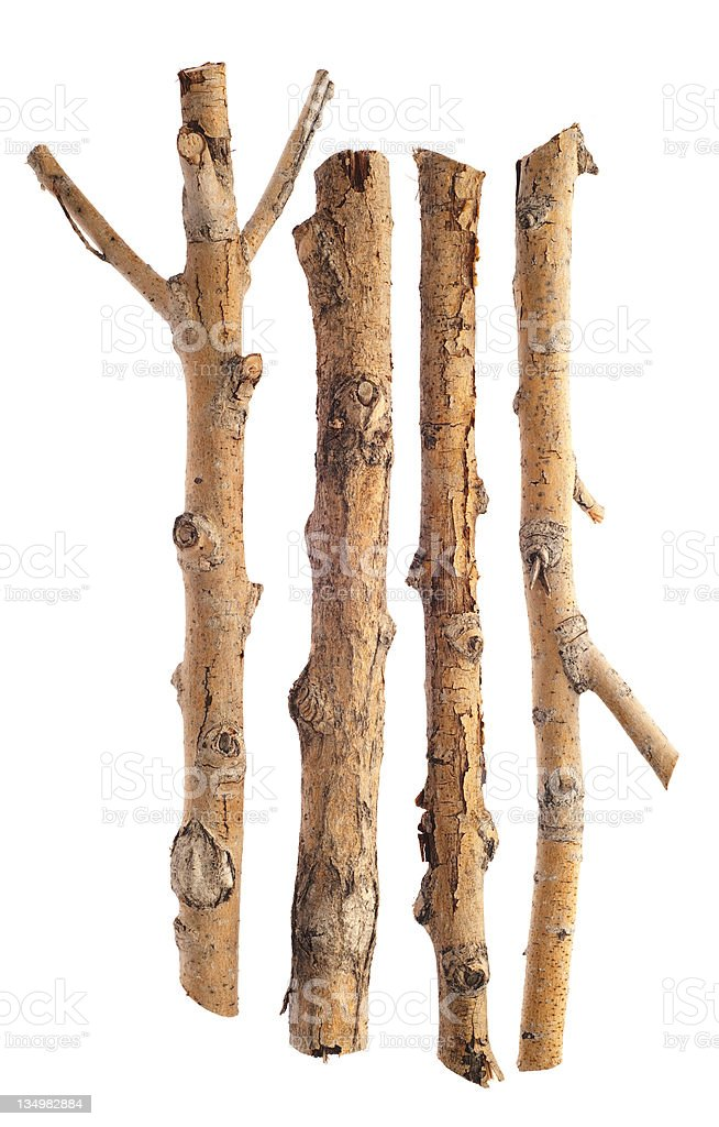 Twigs, Sticks and Branches Isolated on White stock photo