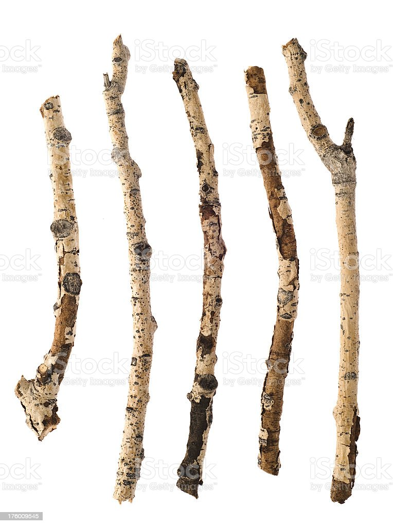 Twigs, Sticks and Branches royalty-free stock photo