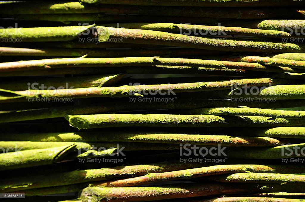 Twigs with moss stock photo
